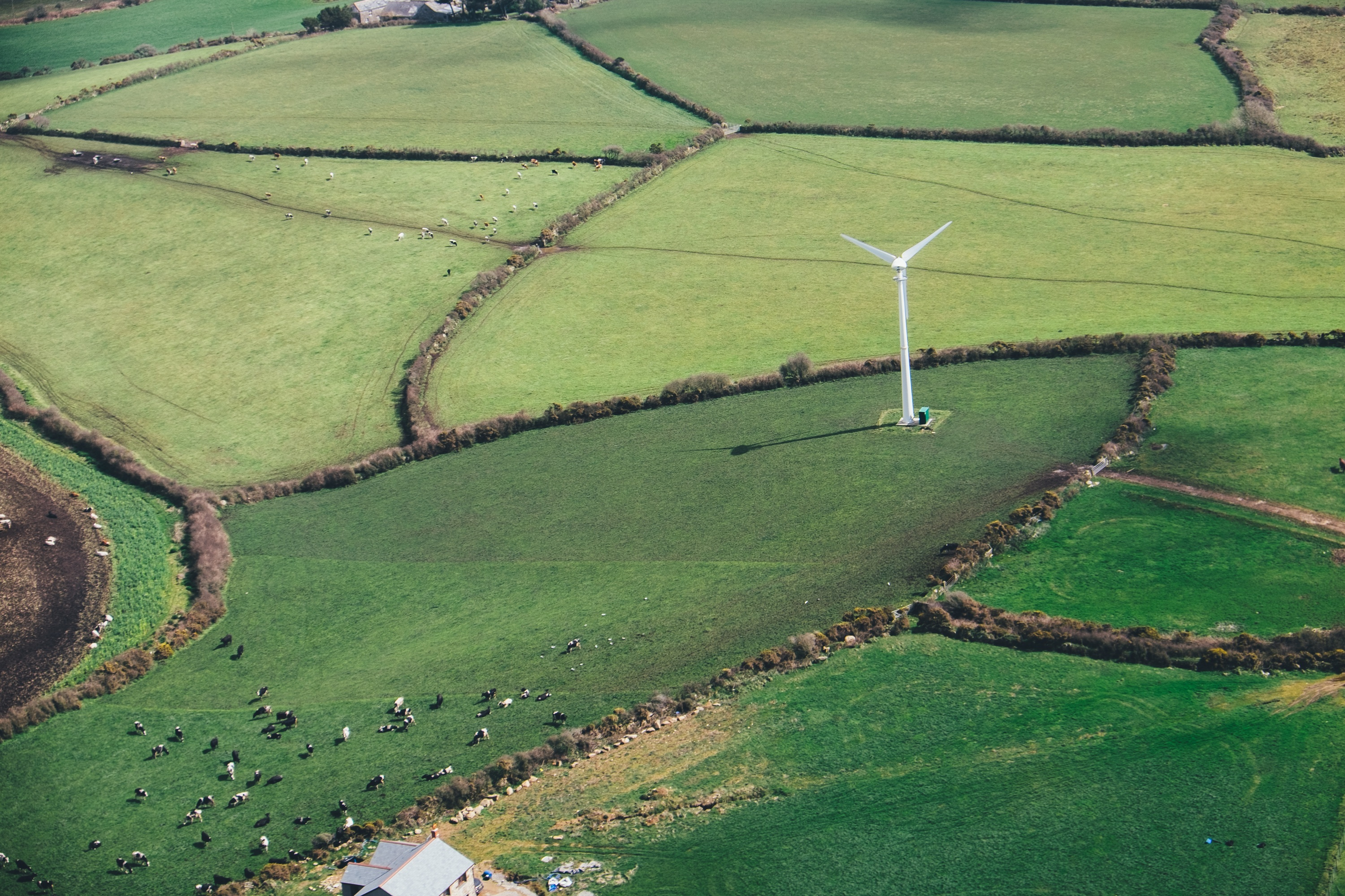 7e570b2fb620d29df984c321ba51399e5702806e   climate wind power field, cows