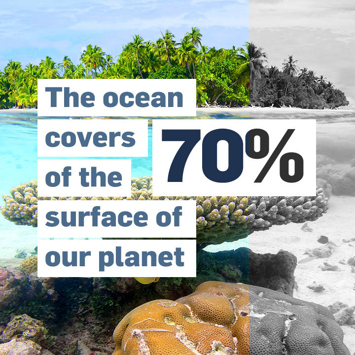 The ocean covers more than 70 per cent of the surface of our planet — home to millions of species